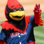 Rocky The Redbird
